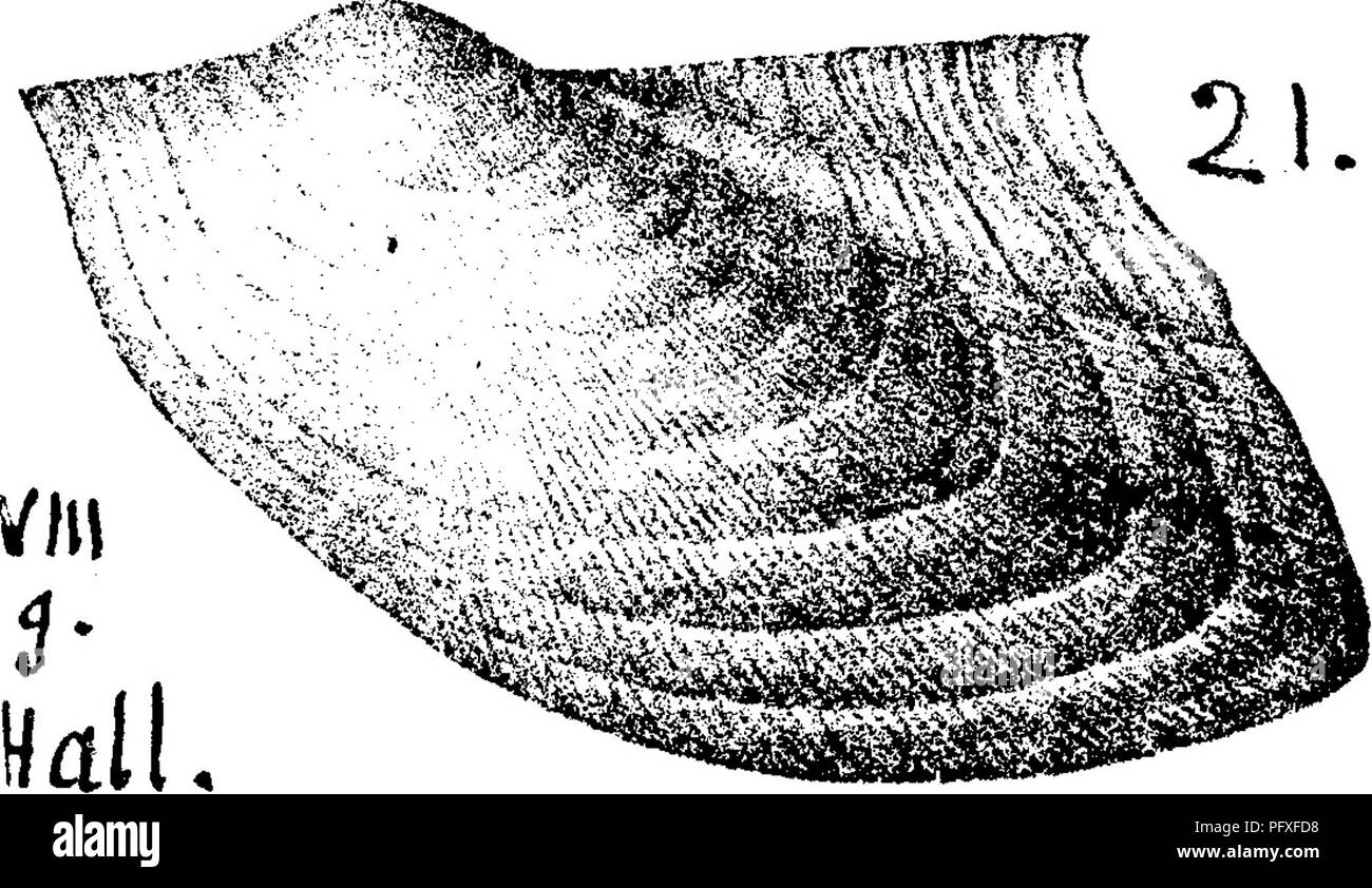 The Iron Bar In Uquot Shape With Dimensions As Shown Diagram Walcott Hall Stock Photos Images Alamy A Dictionary Of Fossils Pennsylvania And Neighboring States Named Reports