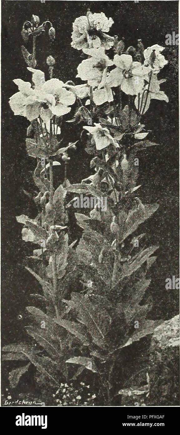Currie's garden annual : spring 1936 61st year  Flowers Seeds