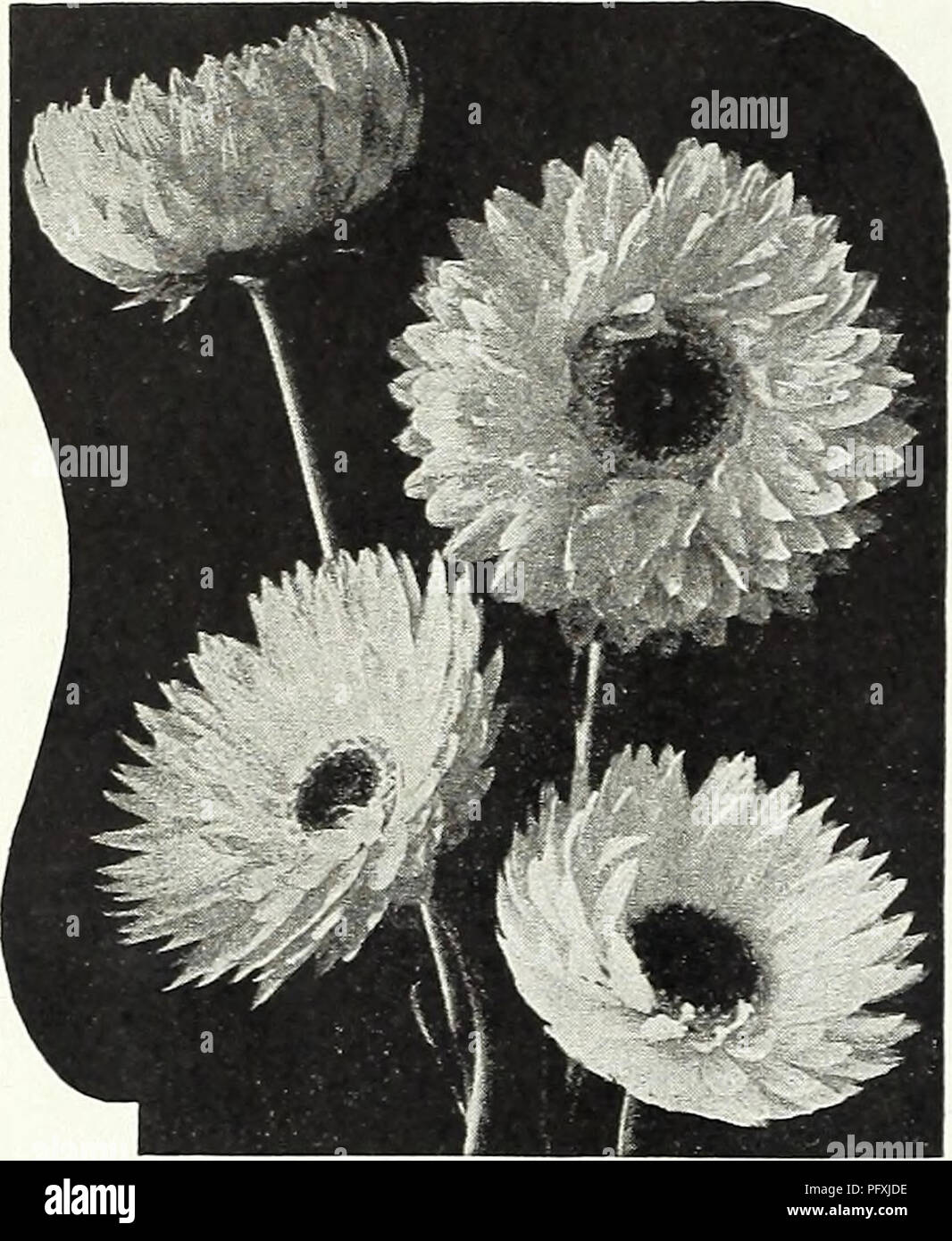 Curries Garden Annual Spring 1936 61st Year Flowers Seeds