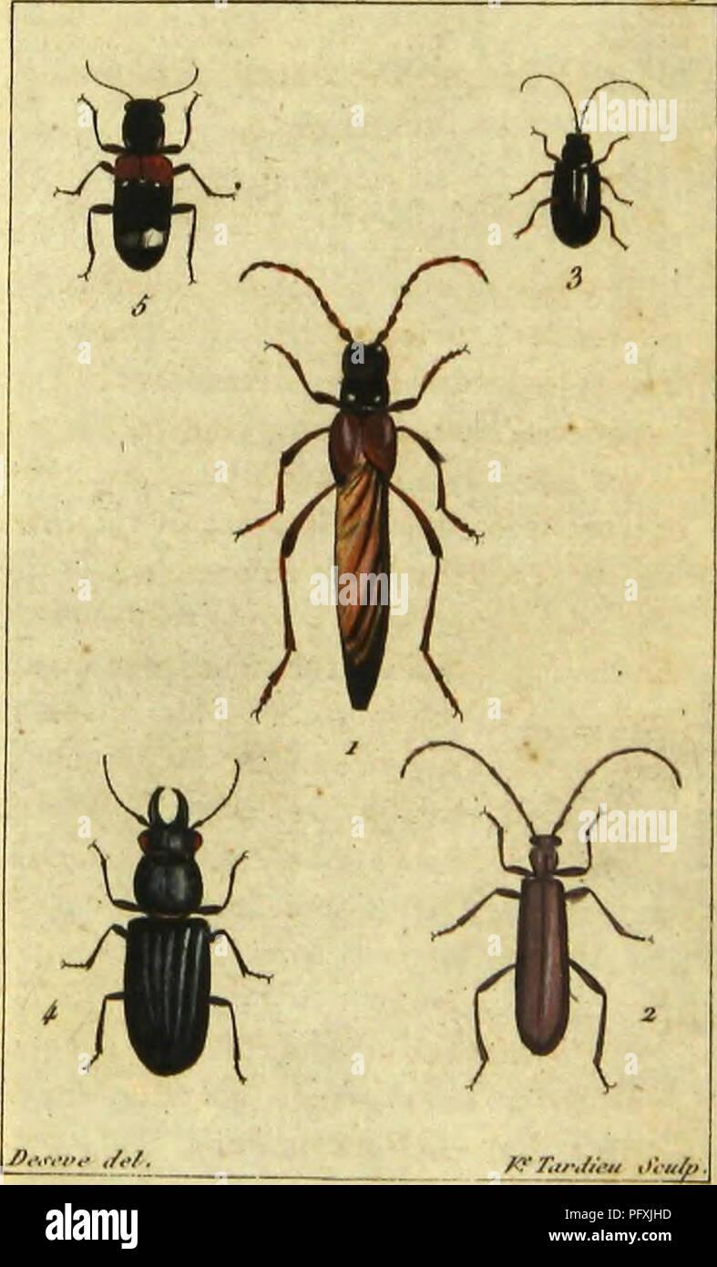. Histoire naturelle des insectes, composeÌe d'apreÌs ReÌamur, Geoffroy, DegeÌer, Roesel, LinneÌ, Fabricius, et les meilleurs ouvrages qui ont paru sur cette partie; reÌdigeÌe suivant la meÌthode d'Olivier, et orneÌe de figures dessineÌes d'apreÌs nature. Insects. //tdc-c/e. Pl.Sff.. . Molni'qiie rarconiri. 4.. SpoiiAvlp tupveïtoïile â i.Onloi><- SerTntironic. 5 . Oiui'o'u AlulilUii'c . 3-l.upci-4- llavipôcU-.. Please note that these images are extracted from scanned page images that may have been digitally enhanced for readability - coloration and appearance of these illustrations m - Stock Image