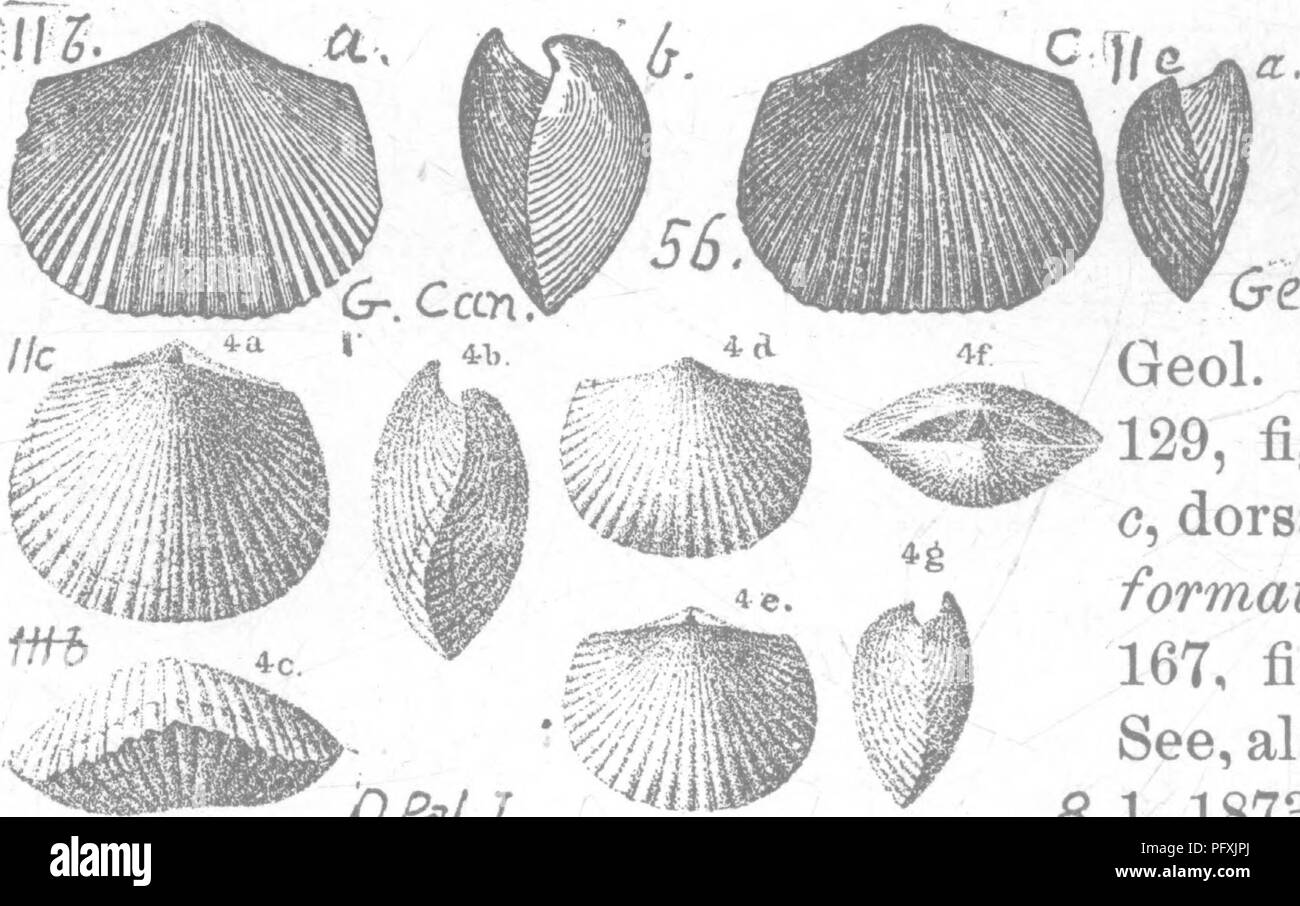 . A dictionary of the fossils of Pennsylvania and neighboring states named in the reports and catalogues of the survey ... Paleontology. - 511 Orth.. Please note that these images are extracted from scanned page images that may have been digitally enhanced for readability - coloration and appearance of these illustrations may not perfectly resemble the original work.. Lesley, J. P. (J. Peter), 1819-1903; Pennsylvania. Board of Commissioners for the Second Geological Survey. Harrisburg, Board of Commissioners for the Geological Survey - Stock Image