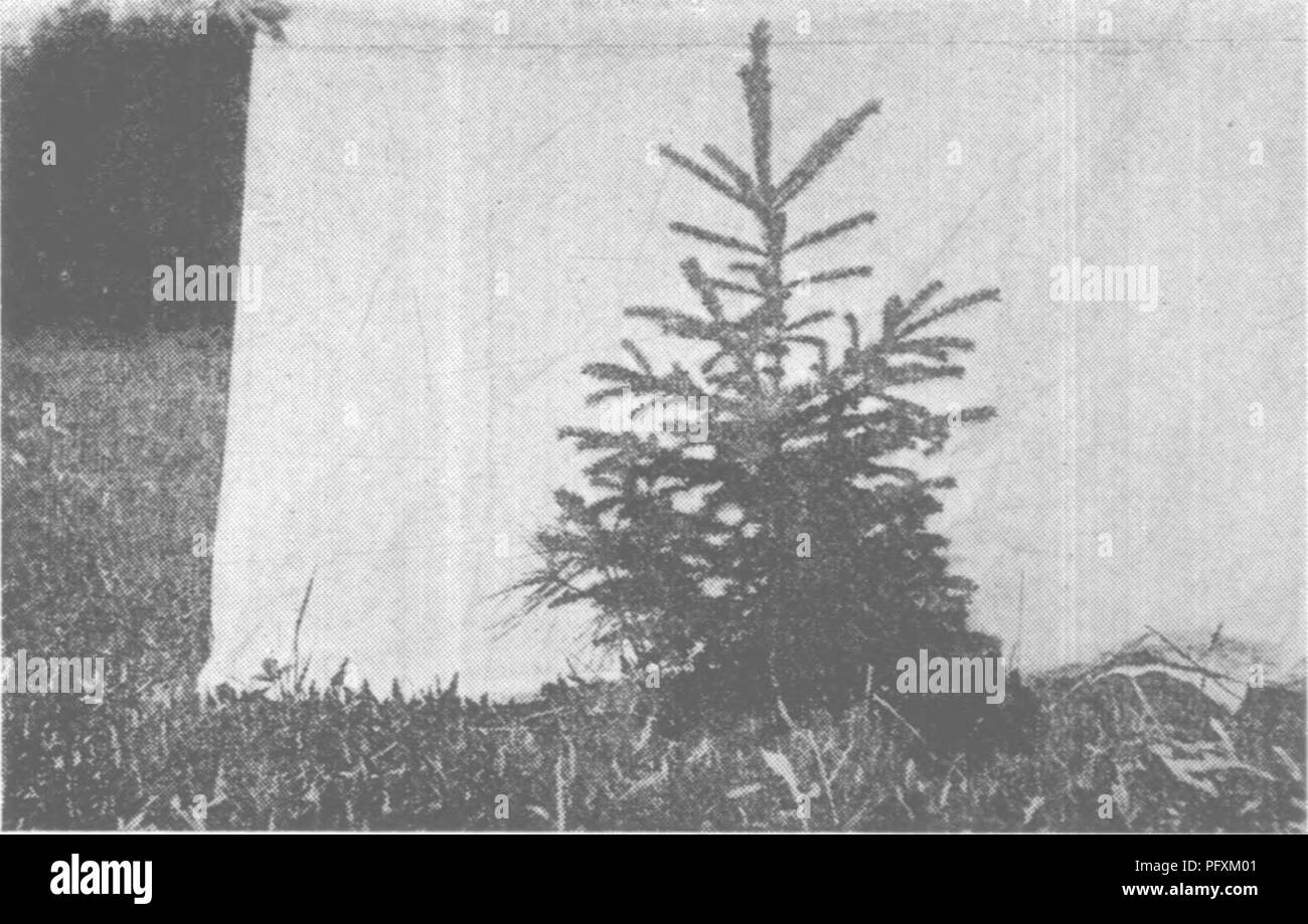 forest protection and conservation in maine 1919 forests and forestry f