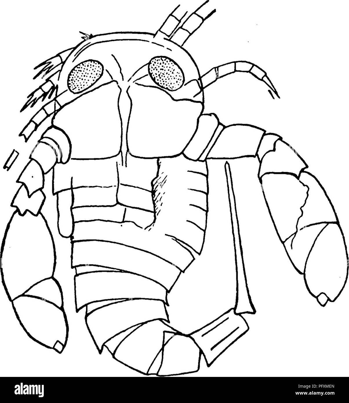 the eurypterida of new york eurypterida paleontology figure 2 z 2 X 3 Design figure 2 z outline camera drawing of young of eurypterus remipes x3 the same specimen is reproduced on plate 4 figure i