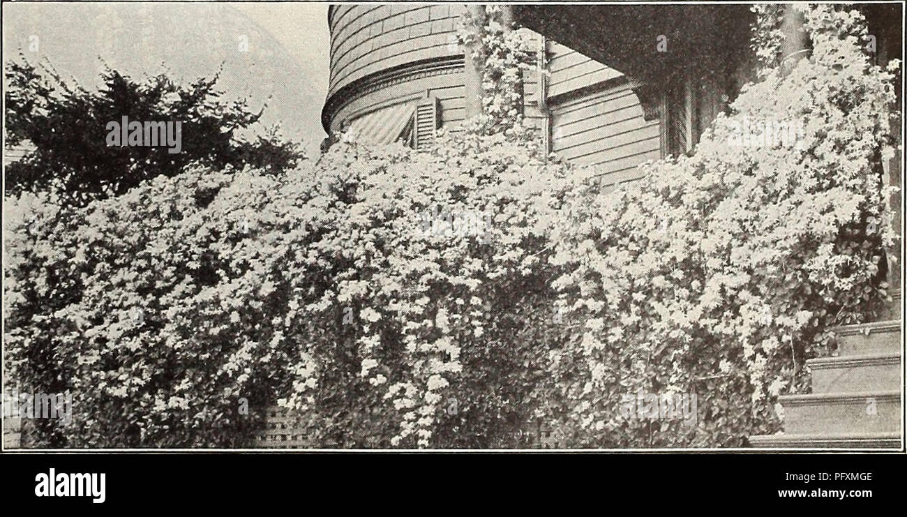 Curries Farm And Garden Annual Spring 1914 Flowers Seeds