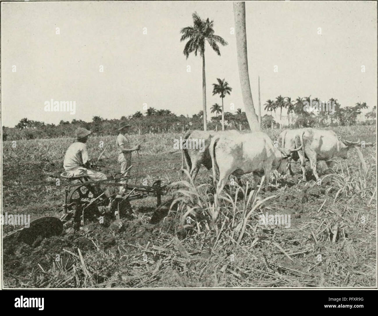The Cuba Review Cuba Periodicals The Cuba Review 19 Ploughing In