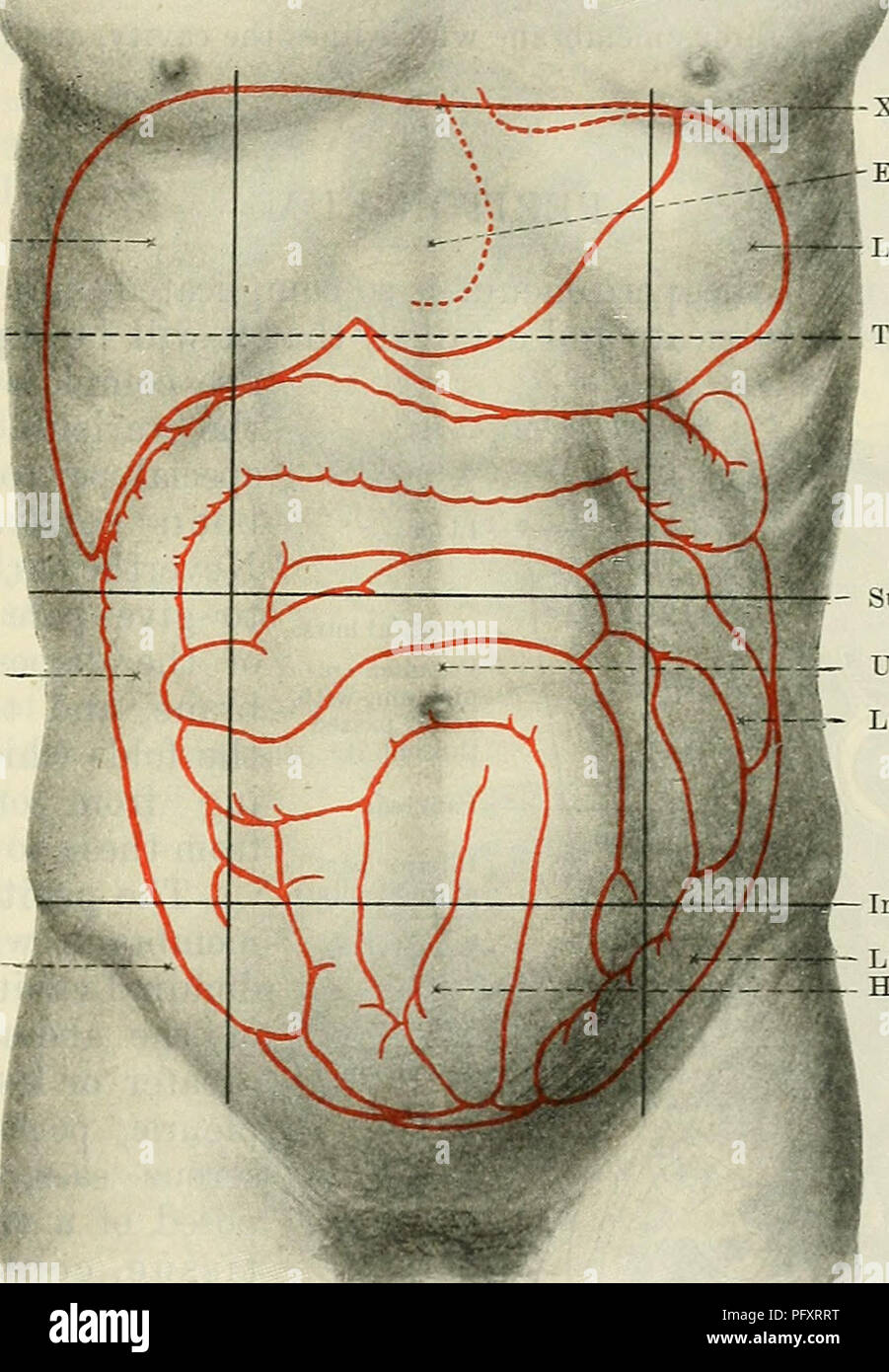 Cunninghams text book of anatomy anatomy the abdominal cavity cunninghams text book of anatomy anatomy the abdominal cavity 1159 perpendicular planes each of these is subdivided into three parts a central and ccuart Gallery