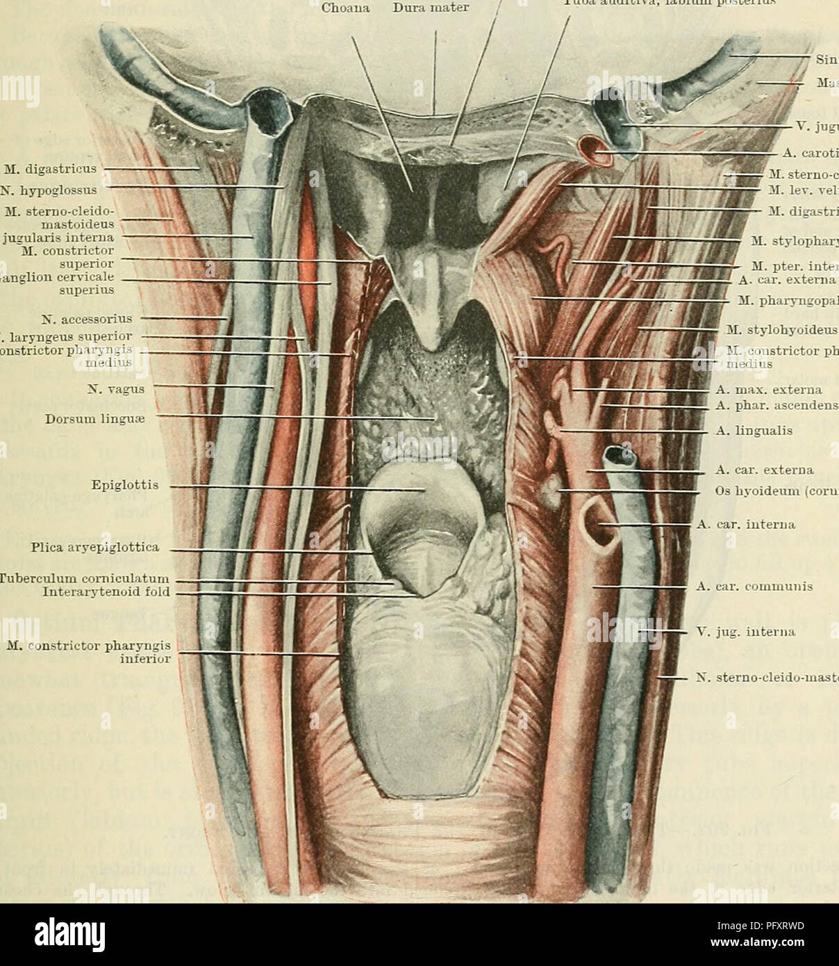interior inferior portion of the pharynx interior design ...