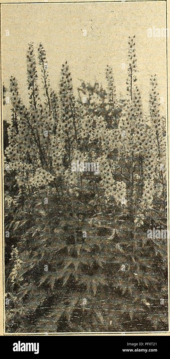 Currie\'s farm and garden annual : spring 1926. Flowers Seeds ...