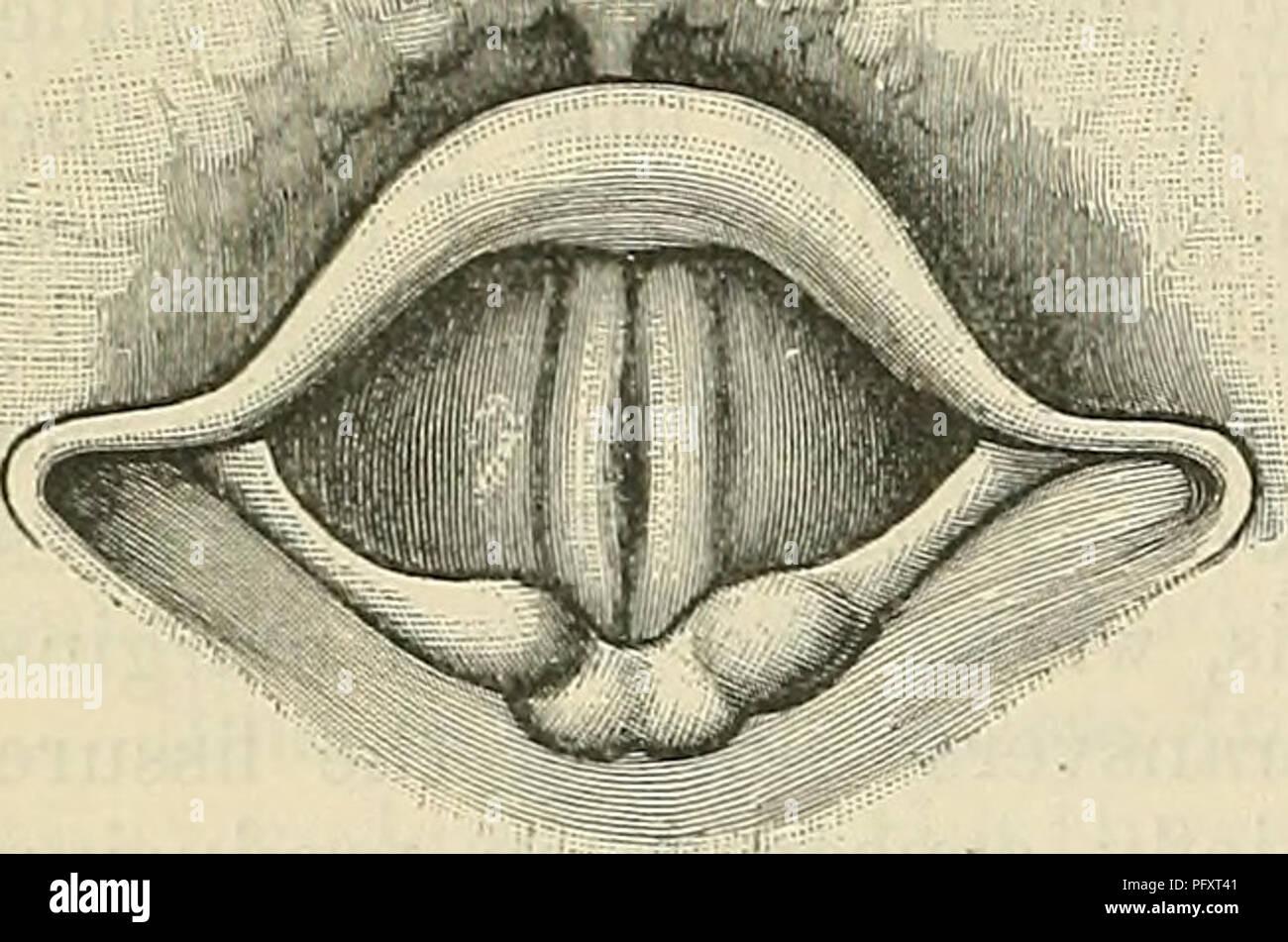 Cunningham\'s Text-book of anatomy. Anatomy. 1078 THE KESPIEATOEY ...