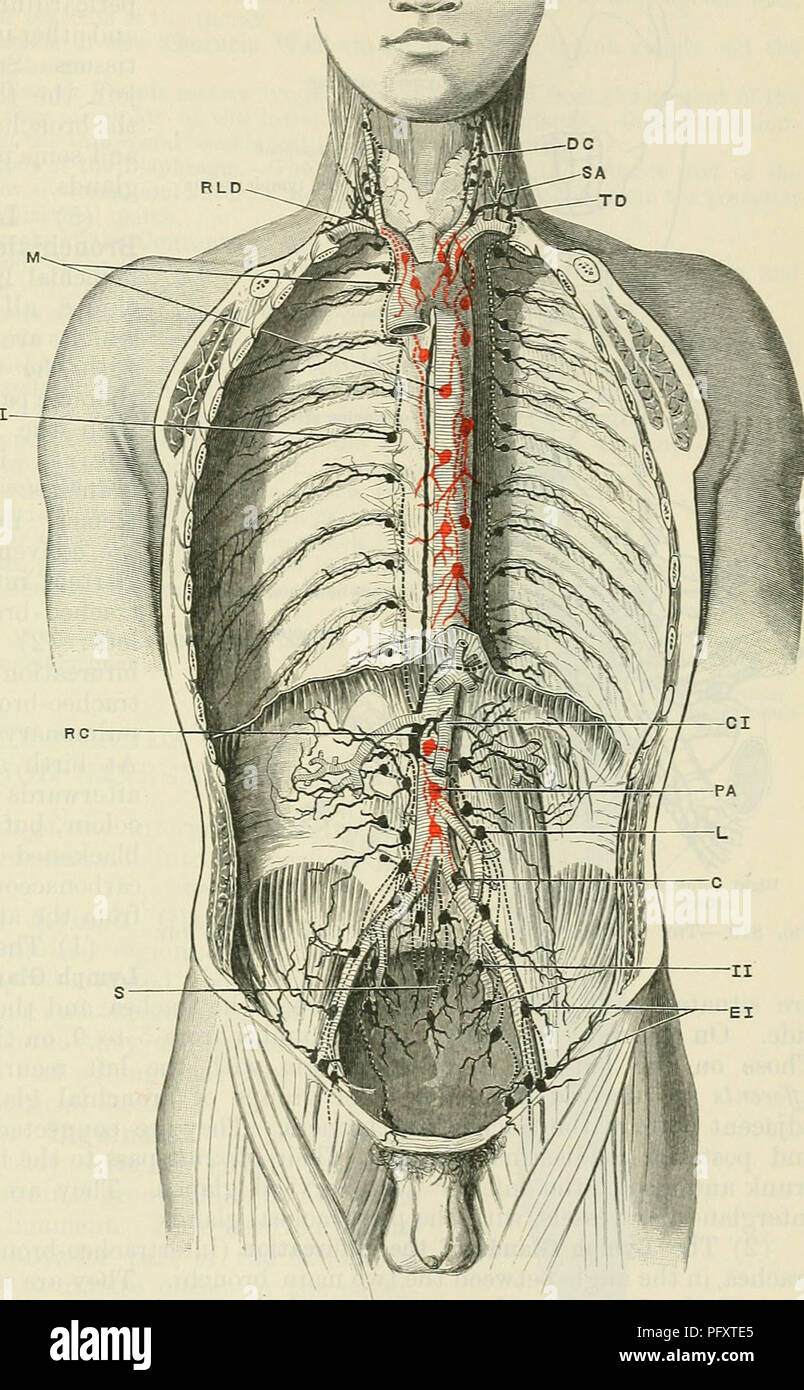 Cunninghams Text Book Of Anatomy Anatomy The Lymph Glaxds Of The