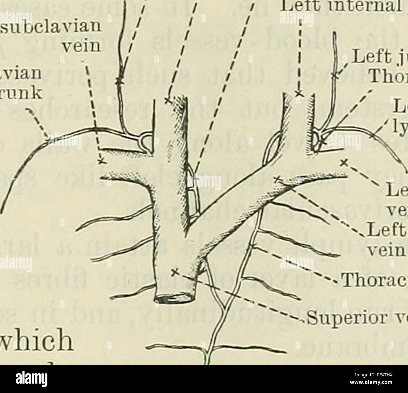 Mesenteric Vein Stock Photos Mesenteric Vein Stock Images Alamy