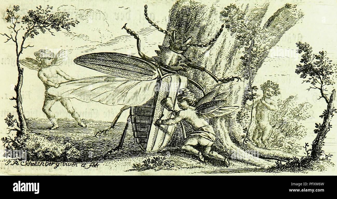 Die Kennzeichen Der Insekten Nach Anleitung Des Konigl Schwed Ritters Und Leibarzts Karl Linnaeus Durch XXIV Entomology LUfcv 4t 3 9