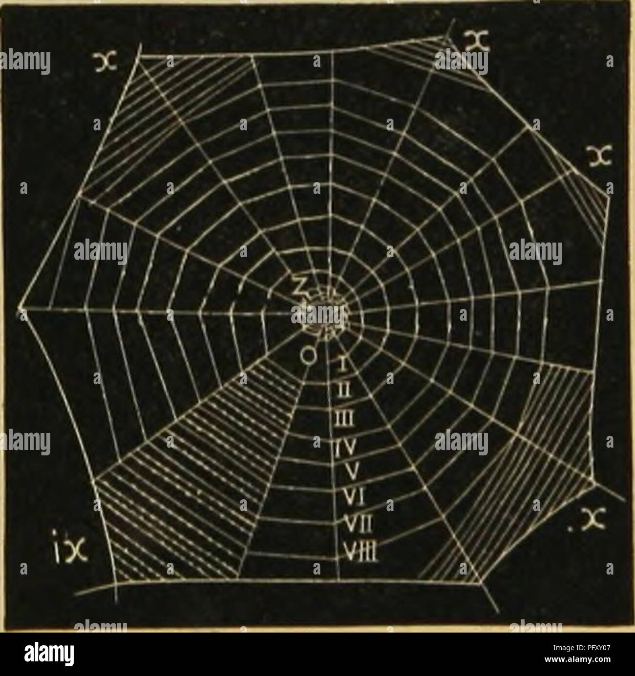 ". American spiders and their spinning work. A natural history of the orbweaving spiders of the United States, with special regard to their industry and habits. Spiders. CHAPTER Y. THE ARMATURE OF ORBWEBS: VISCID SPIRALS. The next step in orbmaking is to prepare for the spinning of the con- centric lines or spirals. This is done by starting a line at or near the notched zone and carrying it around spirally toward the circuin- """"^^^ ^^i"" ference, attaching it by the spinnerets to the intersected radii, folding"" '^^^^ forms the spiral scaifolding. The distance between these li - Stock Image"