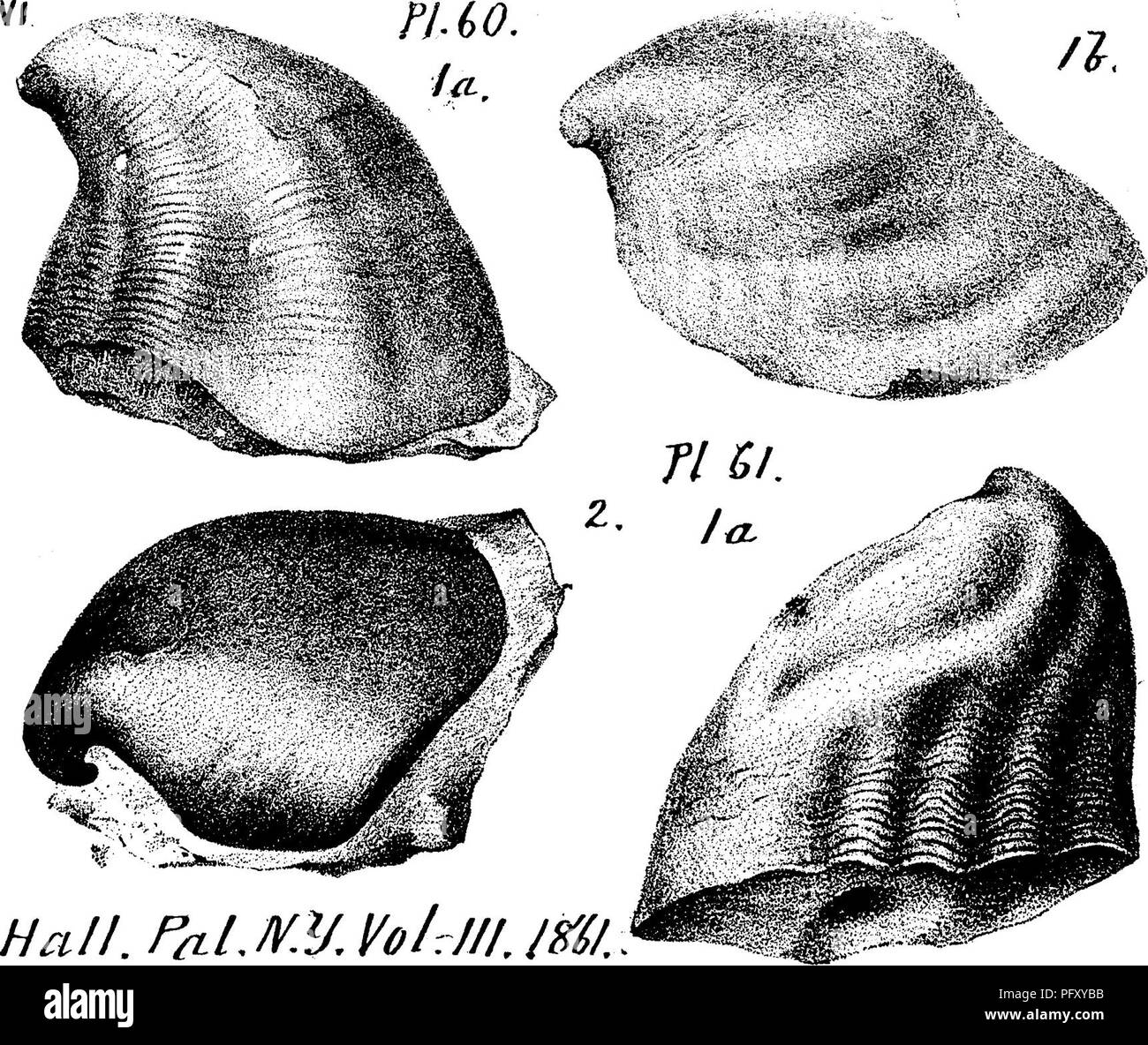 A dictionary of the fossils of Pennsylvania and neighboring