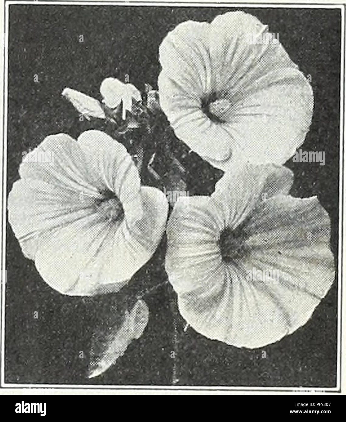 Curries Garden Annual Spring 1934 59th Year Flowers Seeds