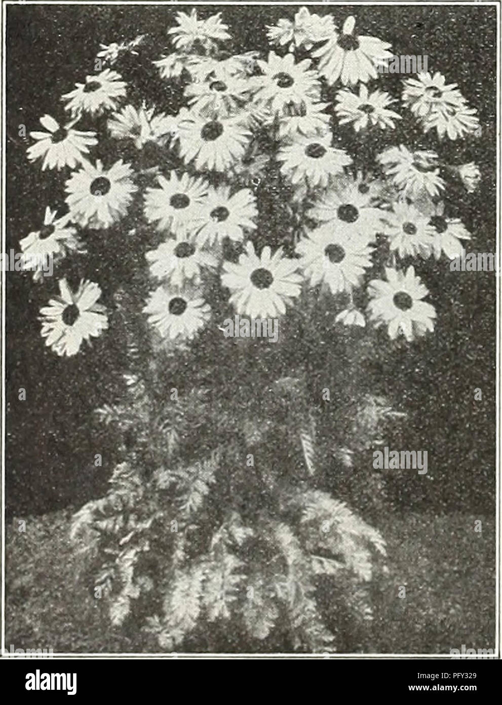 Curries garden annual spring 1931 56th year flowers seeds curries garden annual spring 1931 56th year flowers seeds catalogs bulbs plants seeds catalogs vegetables seeds izmirmasajfo