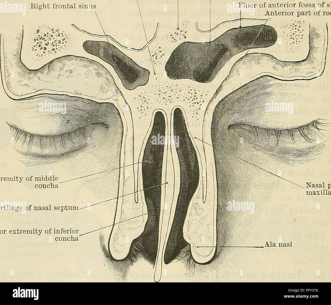 Frontal Sinus Stock Photos & Frontal Sinus Stock Images - Alamy