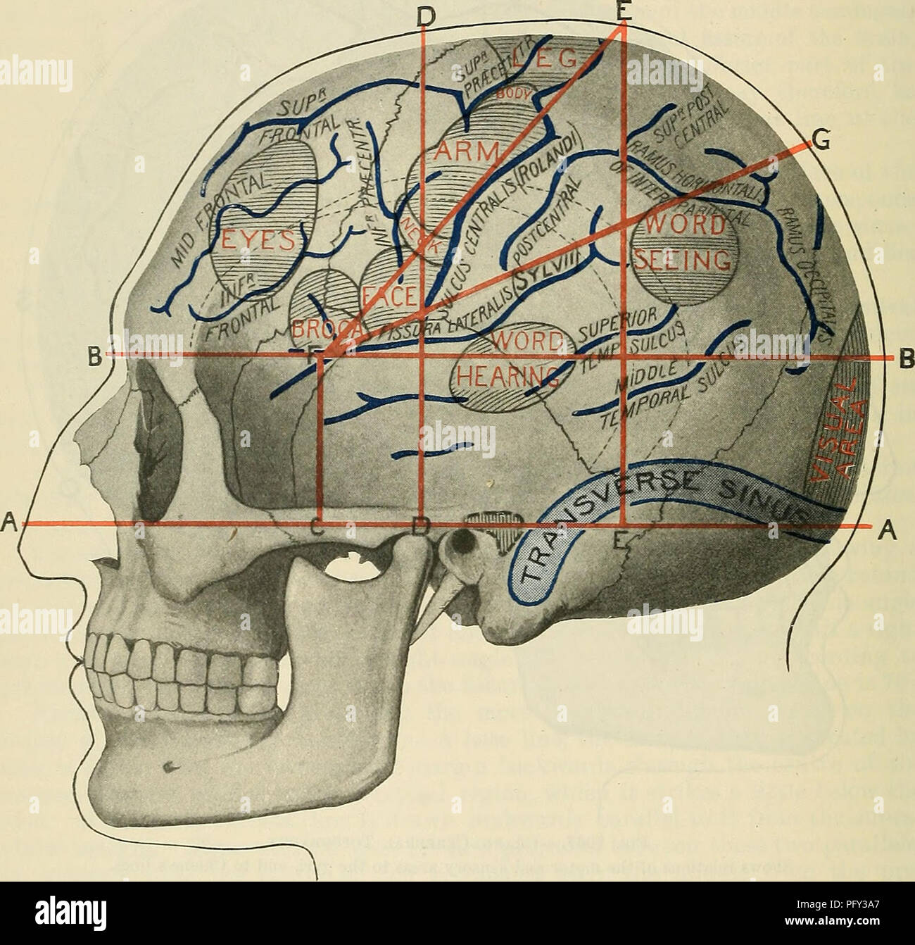 Cunninghams Text Book Of Anatomy Anatomy 1362 Sueface And