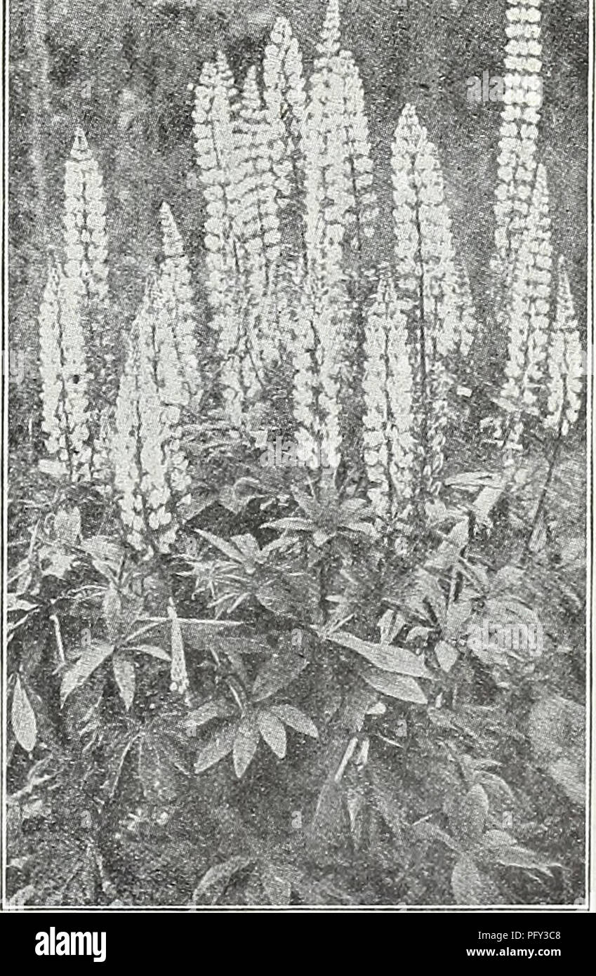 Hardy perennial stock photos hardy perennial stock images page curries garden annual spring 1931 56th year flowers seeds catalogs bulbs mightylinksfo