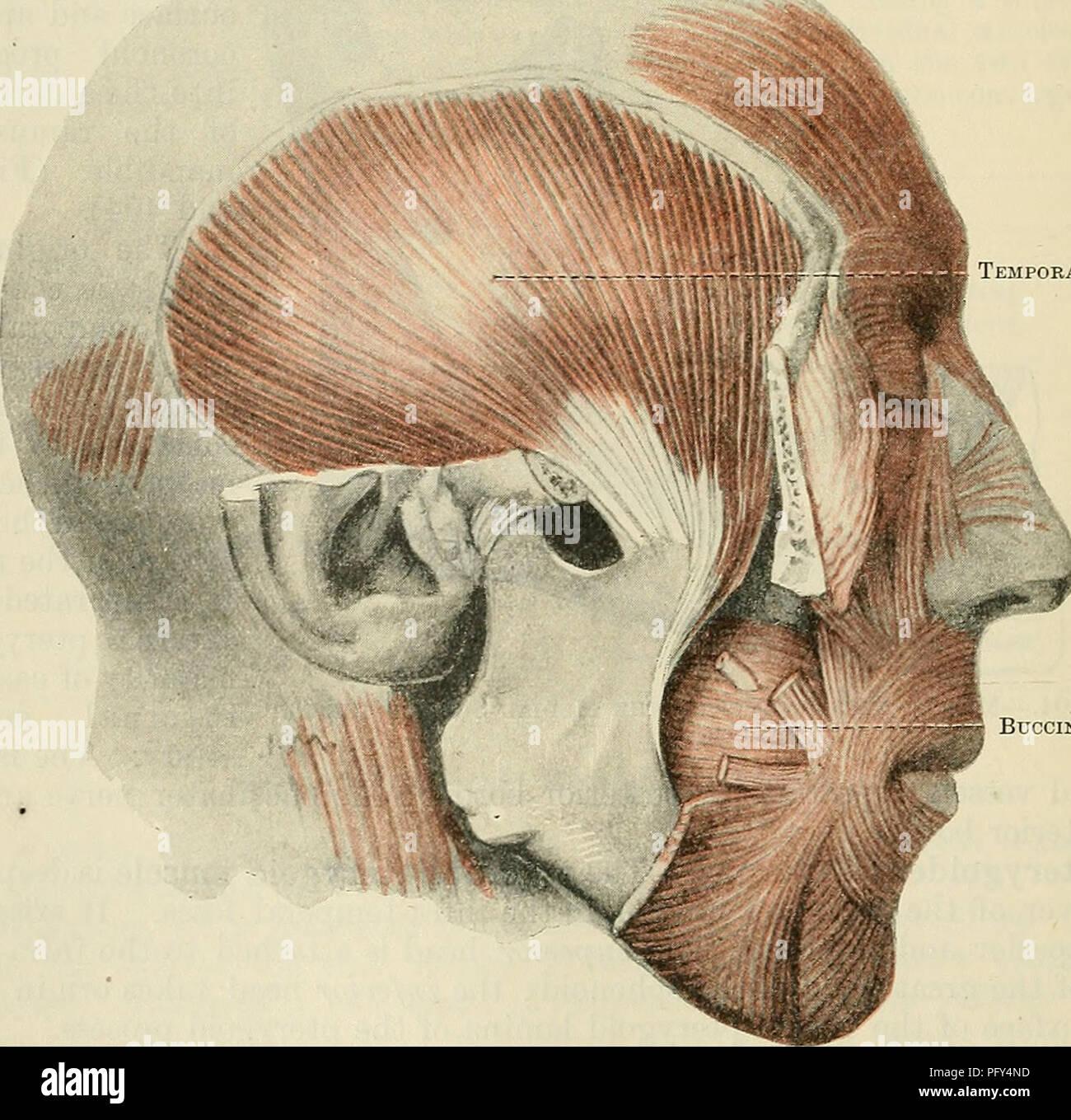 Cunninghams Text Book Of Anatomy Anatomy Auriculo Temporal Nerve