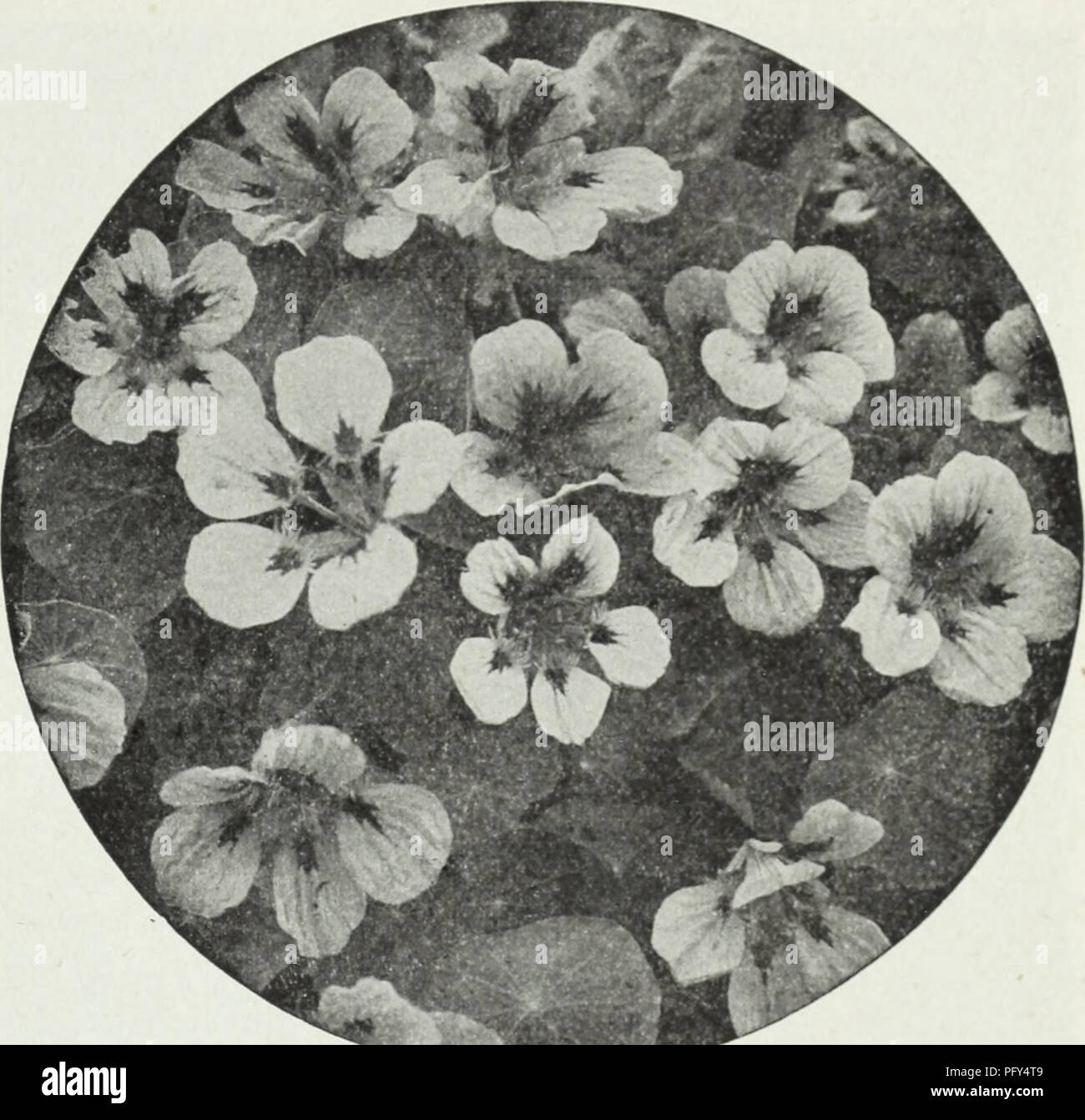 Curries Farm And Garden Annual Spring 1930 Flowers Seeds