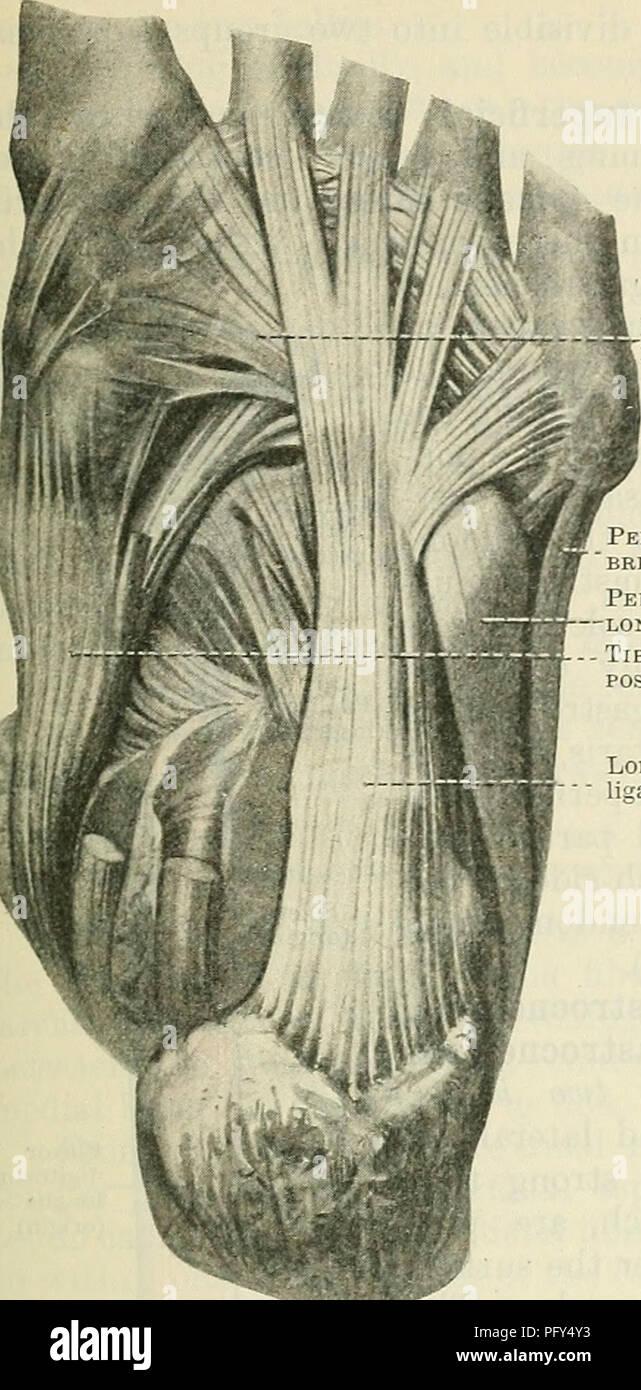 Cuboid Bone Stock Photos & Cuboid Bone Stock Images - Alamy