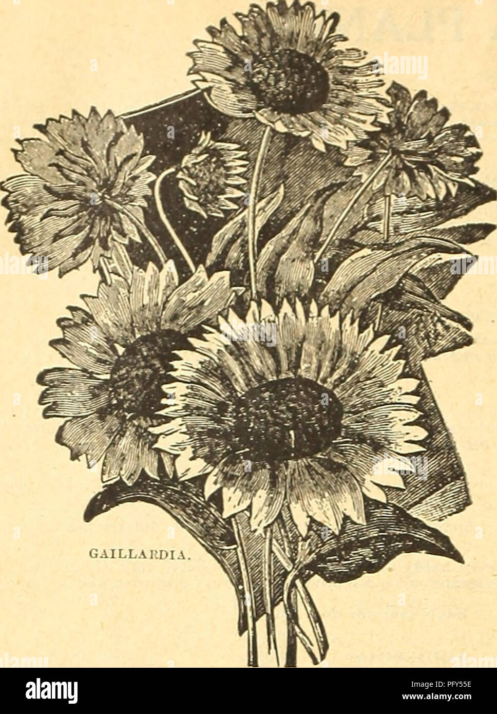 Curries Farm And Garden Annual Spring 1918 43rd Year Flowers