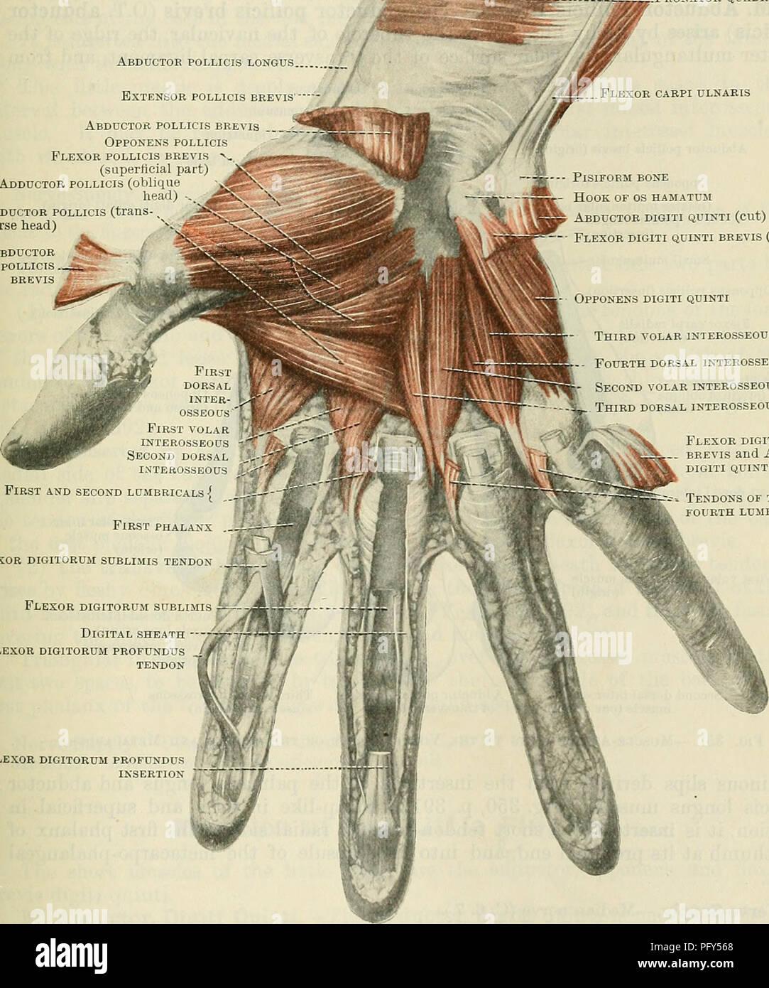 Transverse Carpal Ligament Stock Photos Transverse Carpal Ligament