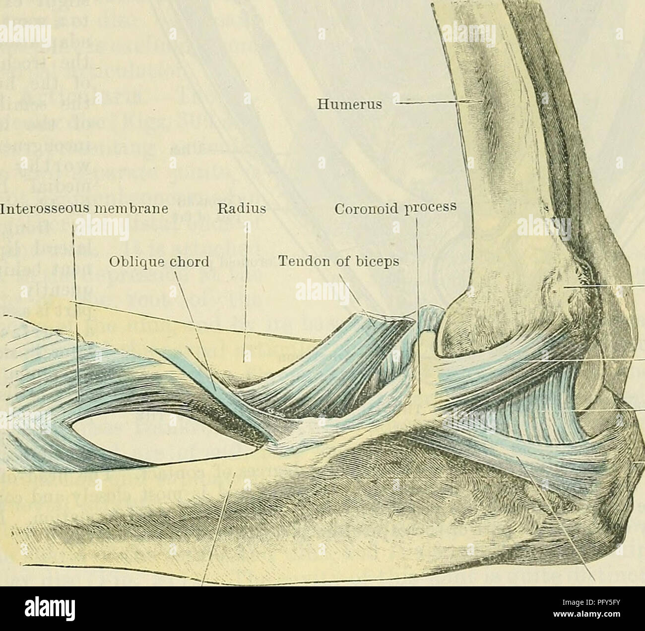 Cunningham\'s Text-book of anatomy. Anatomy. THE ELBOW-JOINT. 325 ...