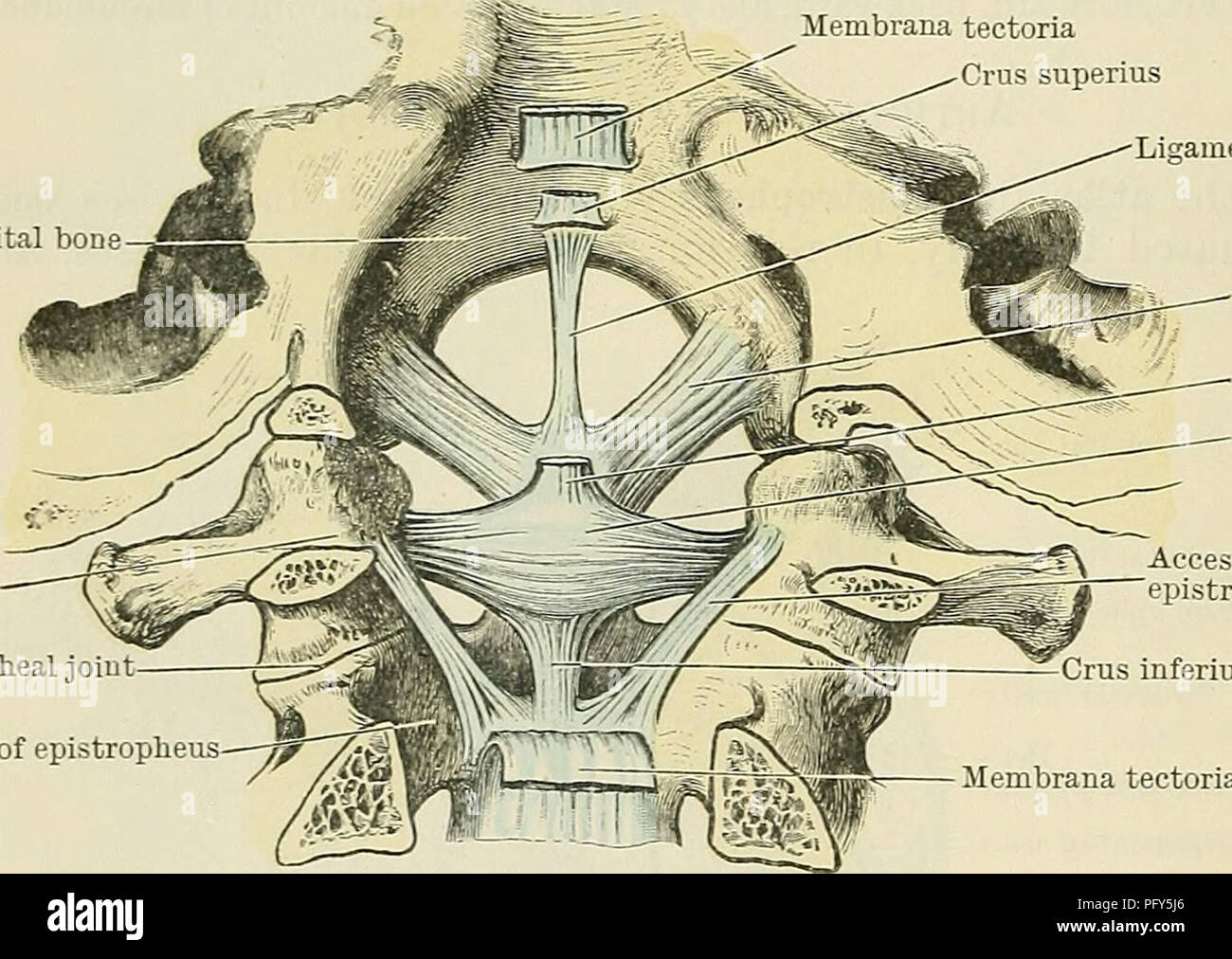 Vertebral Arch Stock Photos & Vertebral Arch Stock Images - Alamy