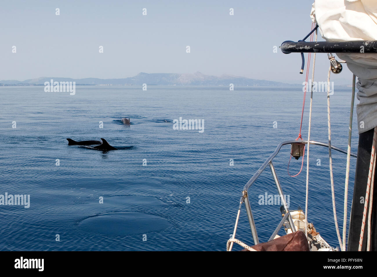 Dolphins, Corfu Channel, Greece - Stock Image