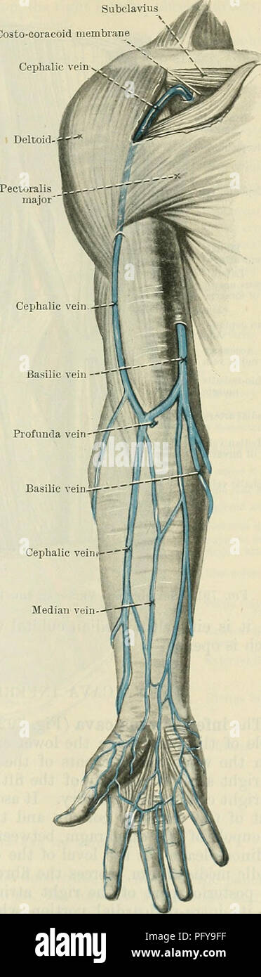 Cunningham\'s Text-book of anatomy. Anatomy. THE SUPEKFICIAL VEINS OF ...