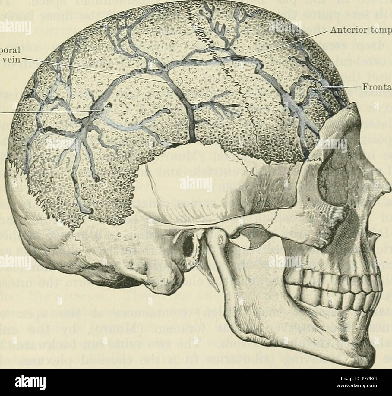 Cunninghams Text Book Of Anatomy Anatomy Diploic And Meningeal