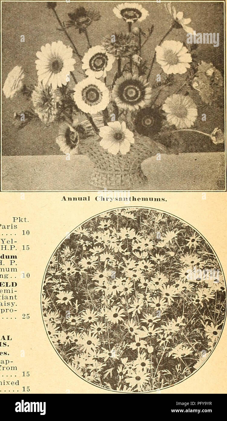 Curries Farm And Garden Annual Spring 1924 49th Year Flowers