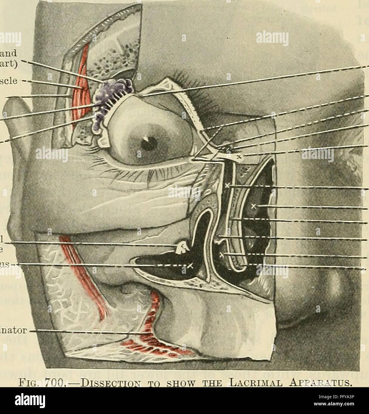 Cunningham\'s Text-book of anatomy. Anatomy. 824 THE ORGANS OF SENSE ...