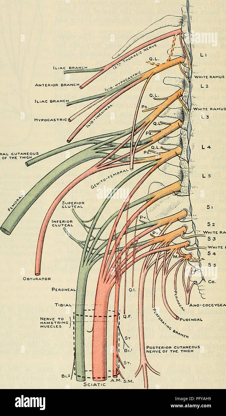Cunninghams Text Book Of Anatomy Anatomy 736 The Neevous System