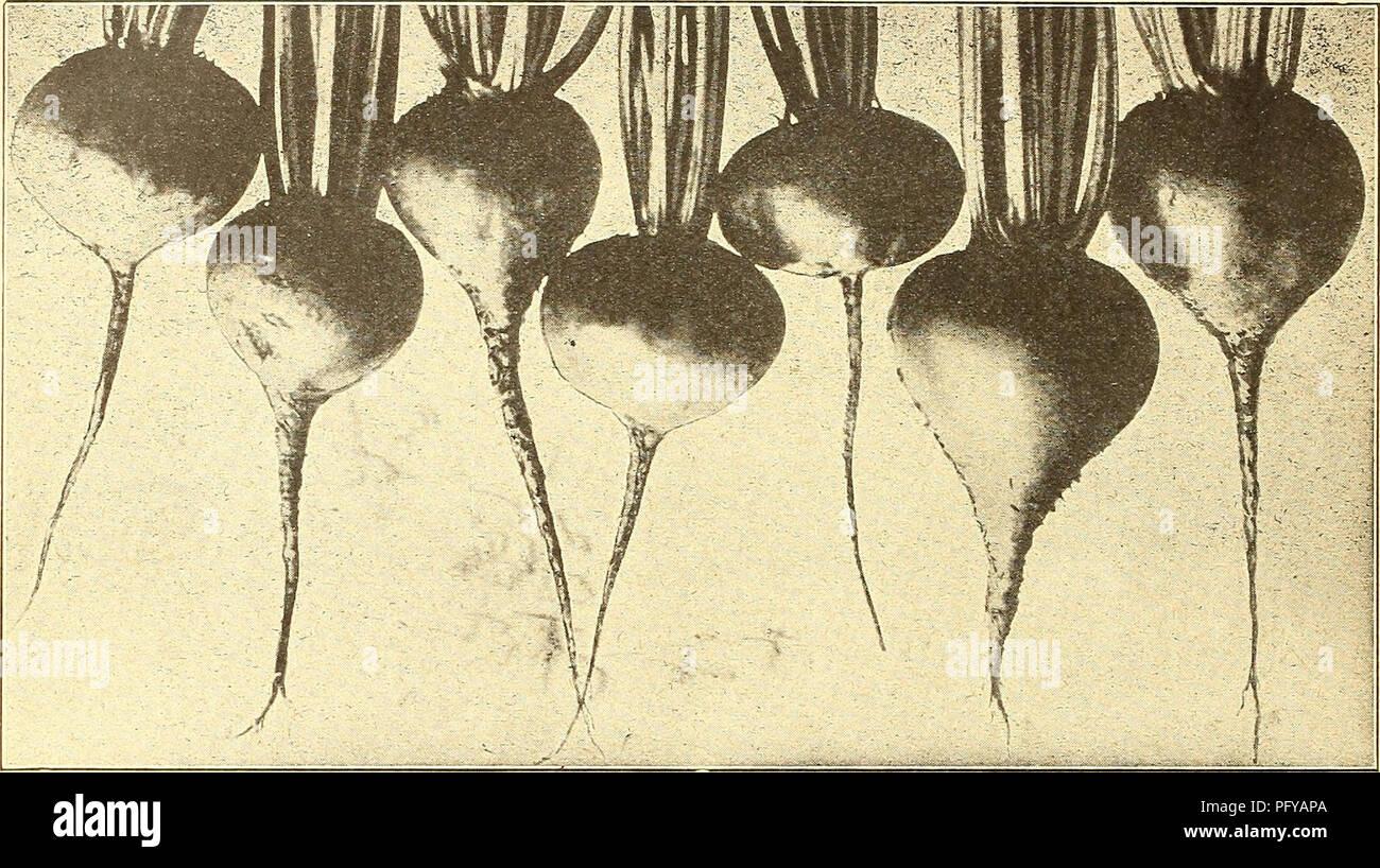 Early Light Bulbs Stock Photos & Early Light Bulbs Stock
