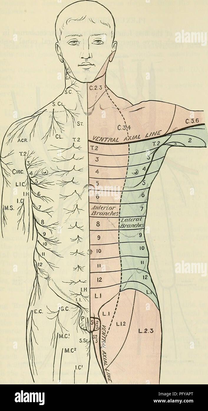 Cunninghams Text Book Of Anatomy Anatomy Cekvical Nerves 693 The