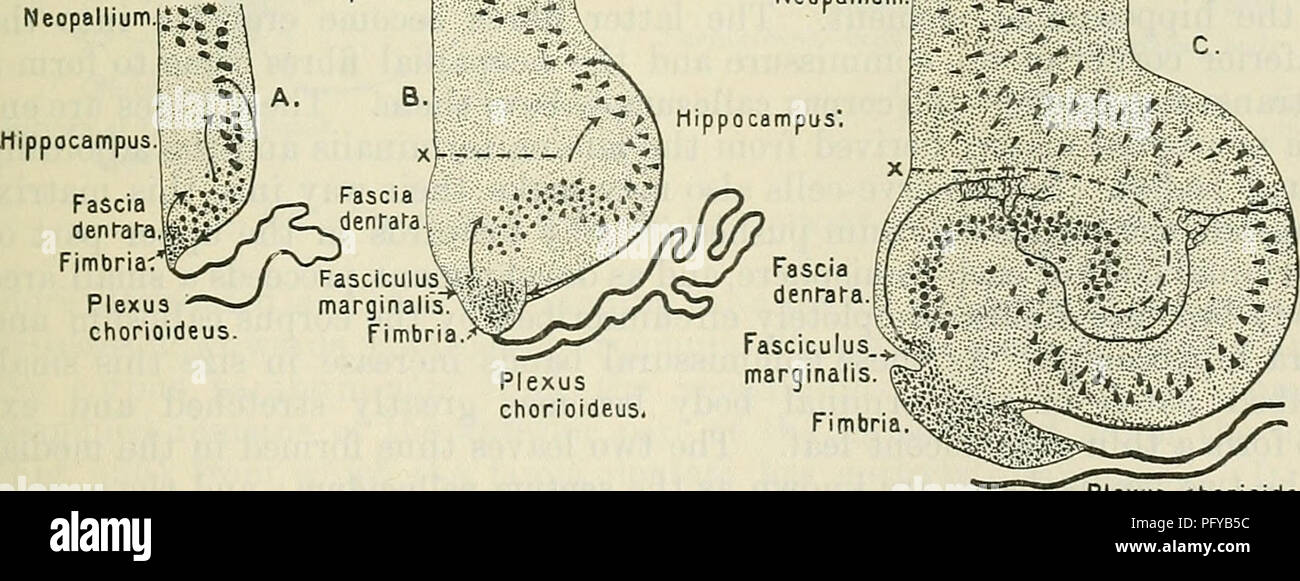Cunningham\'s Text-book of anatomy. Anatomy. THE CONNEXIONS OF THE ...