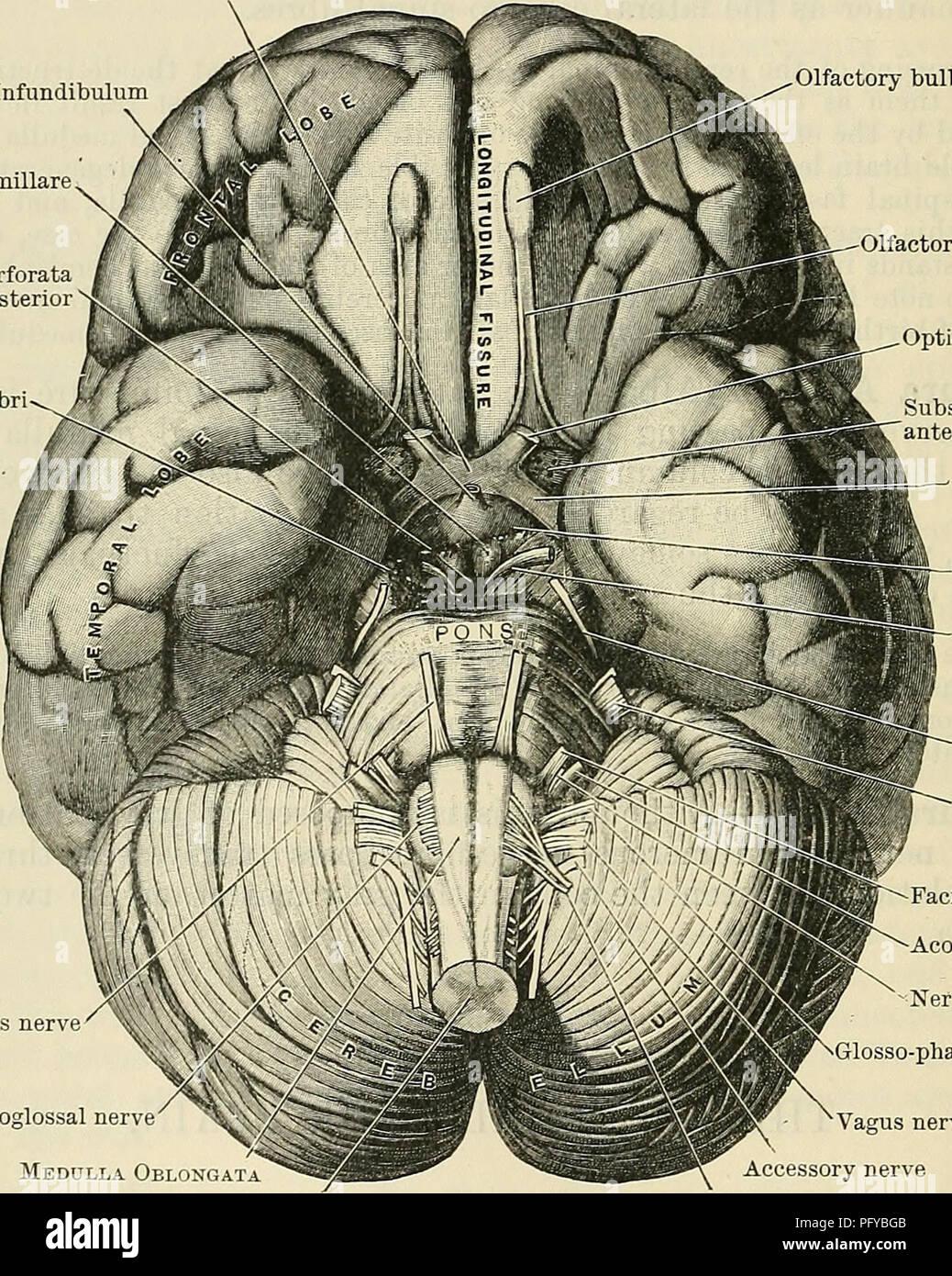 Cranial Cavity Stock Photos Cranial Cavity Stock Images Alamy