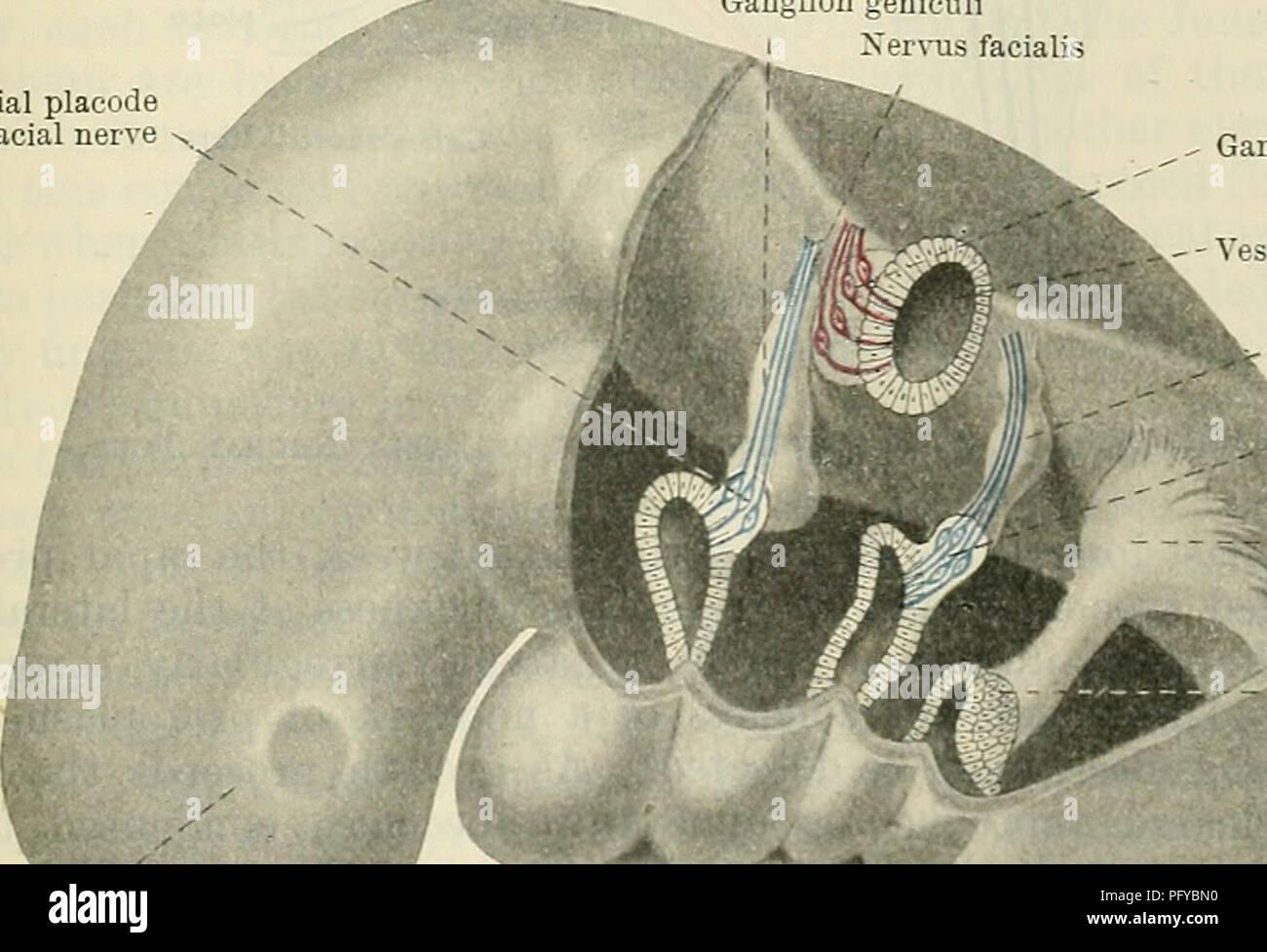 geni sædceller