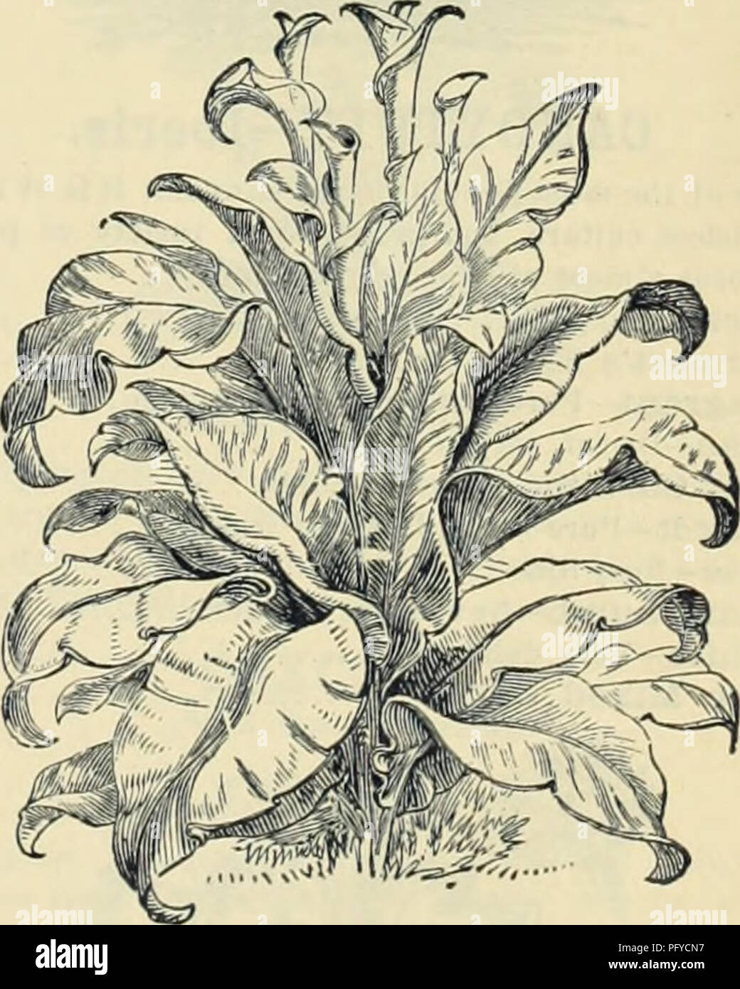 Currie Bros Horticultural Guide Spring 1888 Nursery Stock