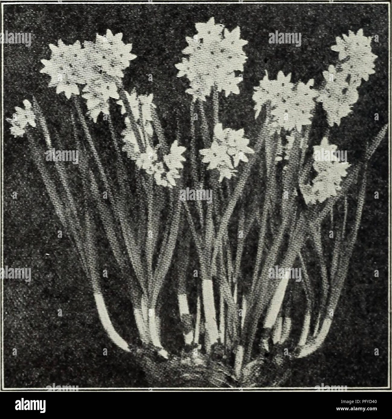 Currie's bulbs and plants : autumn 1928  Flowers Seeds