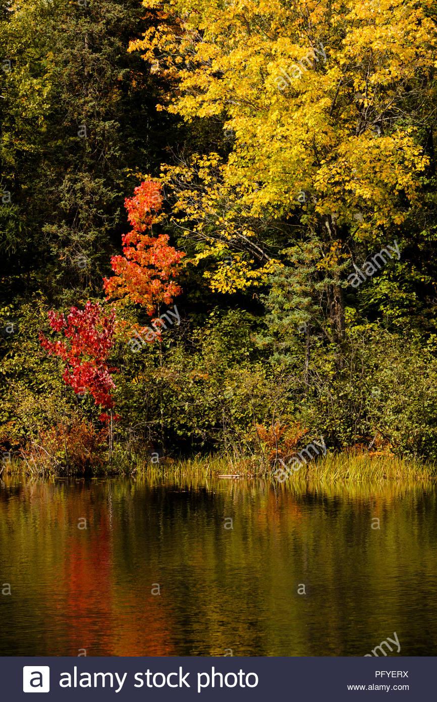 Autumn Colors In Vilas Park Lagoon >> Autumn Shoreline Colors At Star Lake Near Sayner In Vilas County