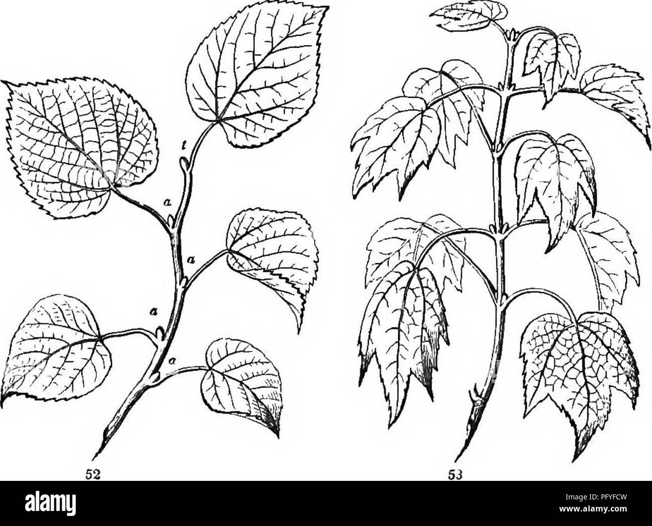 mon named plants stock photos mon named plants stock images Live Aquarium Plants for Beginners botany for young people and mon schools how plants grow a simple introduction