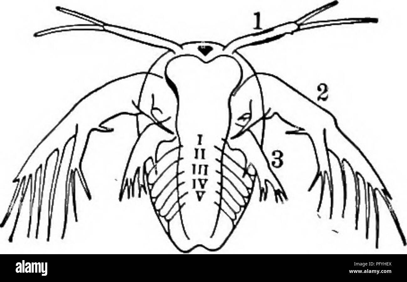 Fresh-water biology  Freshwater biology  Fig  1013 Estheria