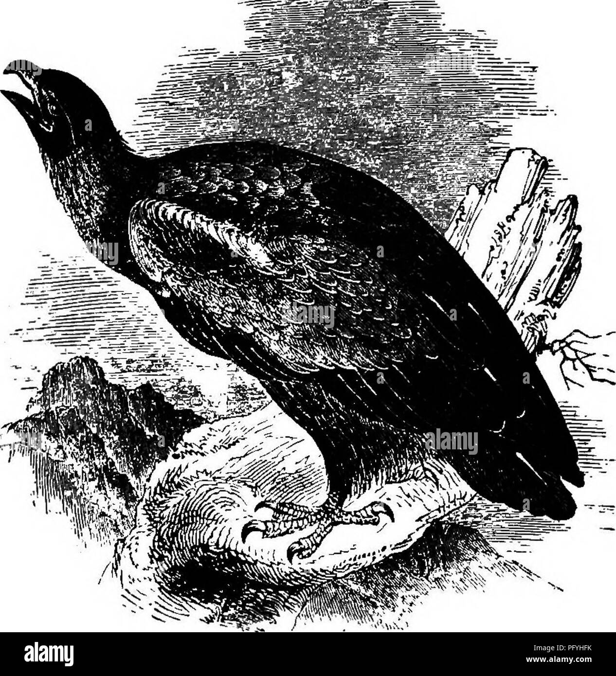 Illustrated natural history comprising descriptions of
