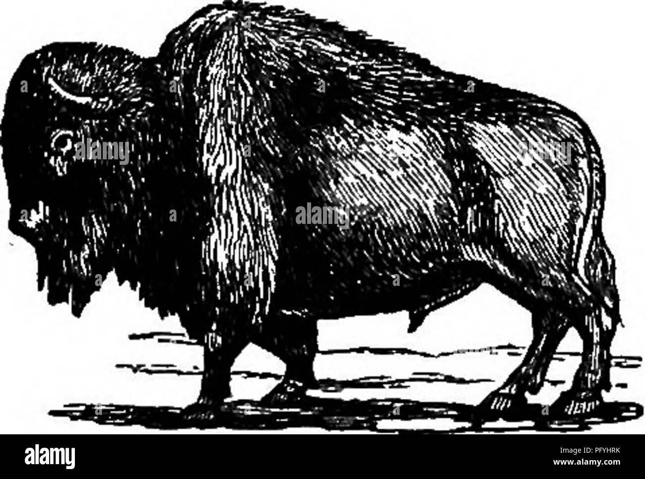 Illustrated natural history : comprising descriptions of