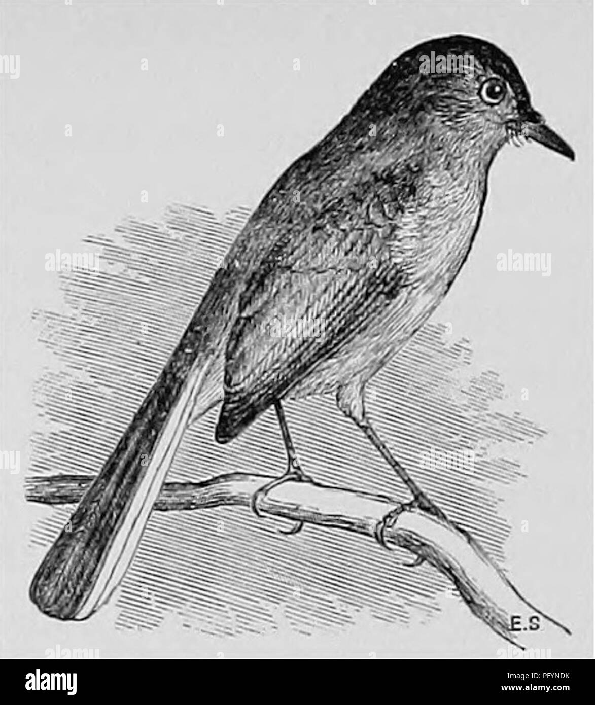 Beneath Our Feet Black And White Stock Photos Images Alamy The Iron Bar In Uquot Shape With Dimensions As Shown Diagram A Popular Handbook Of Ornithology United States Canada Based On