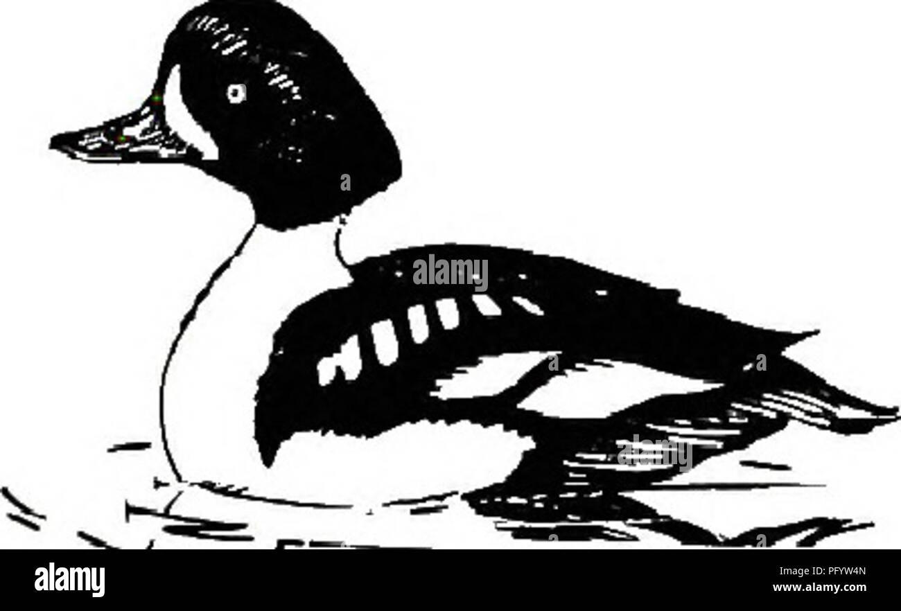 . Birds of Yellowstone and Grand Teton National Parks . Birds; Birds. Blackbirds and Orioles: r r Bobolink Ic Ic Ic Western Meadowlark Ic Ic Ic Yellow-headed Blackbird c c c Red-winged Blackbird X Tri-colored Blackbird r r r Northern Oriole Rusty Blackbird X Common Crackle c c c Brewer's Blackbird o o o Brown-headed Cowbird o o c o r o a r o X Ic r o c r c o a r c o o c o r o a r o X Ic r c r c o a o o o o r r o c c c r r r o 0 c c c r r o o o o Tanagers: Western Tanager Grosbeaks, Sparrows and Finches: Rose-breasted Grosbeak Black-headed Grosbeak Indigo Bunting Lazuli Bunting Evening Grosbeak - Stock Image
